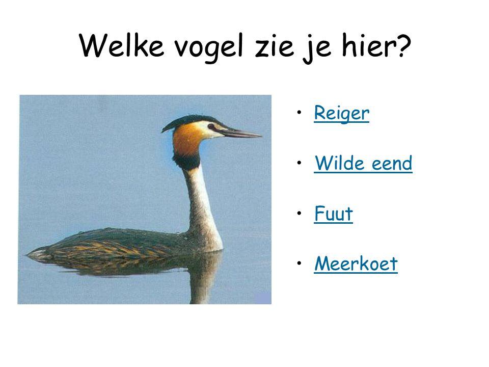 Welke vogel zie je hier? Reiger Wilde eend Fuut Meerkoet
