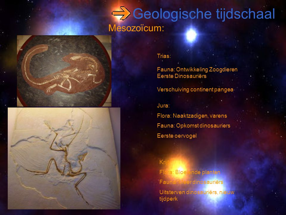 Geologische tijdschaal Mesozoïcum: Trias: Fauna: Ontwikkeling Zoogdieren Eerste Dinosauriërs Verschuiving continent pangea Jura: Flora: Naaktzadigen,