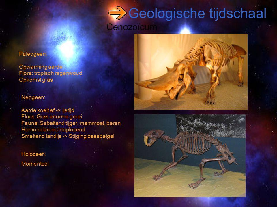 Geologische tijdschaal Cenozoïcum Paleogeen: Opwarming aarde Flora: tropisch regenwoud Opkomst gras Holoceen: Momenteel Neogeen: Aarde koelt af -> ijs
