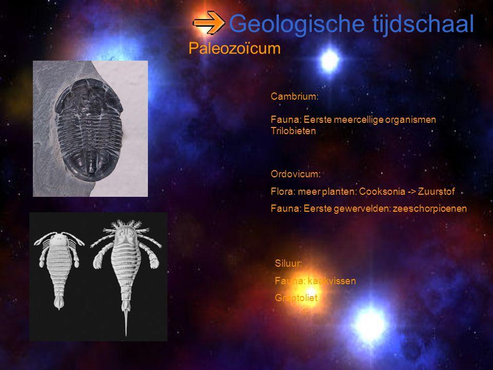 Geologische tijdschaal Paleozoïcum Cambrium: Fauna: Eerste meercellige organismen Trilobieten Ordovicum: Flora: meer planten: Cooksonia -> Zuurstof Fa