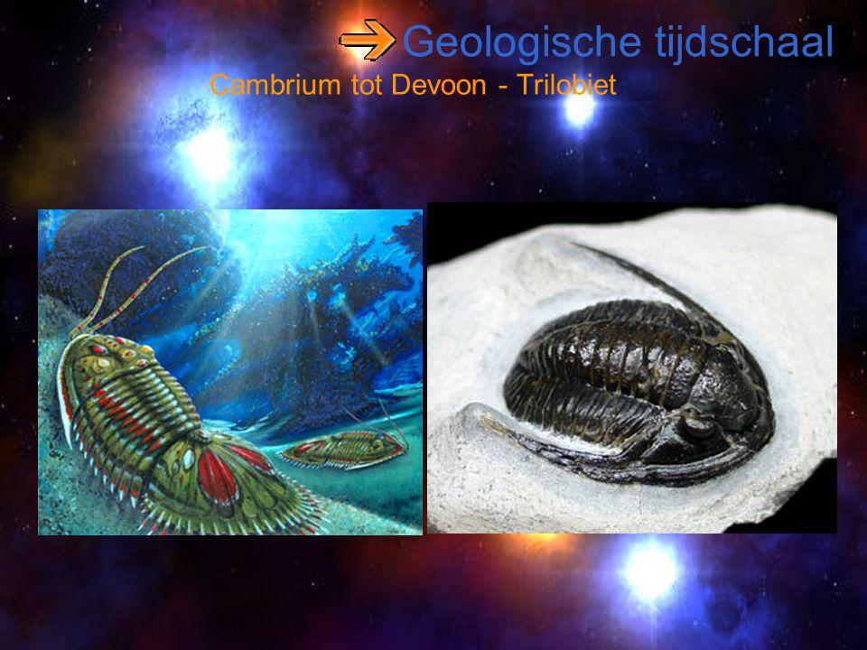 Geologische tijdschaal Cambrium tot Devoon - Trilobiet