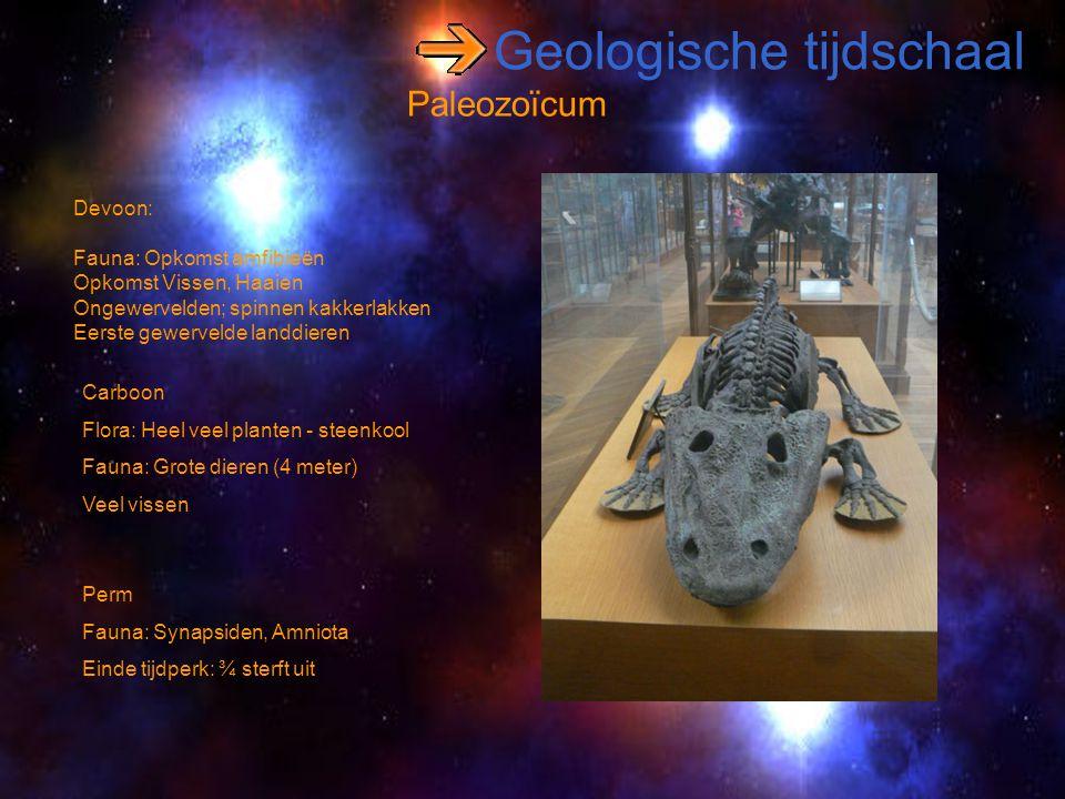 Geologische tijdschaal Paleozoïcum Devoon: Fauna: Opkomst amfibieën Opkomst Vissen, Haaien Ongewervelden; spinnen kakkerlakken Eerste gewervelde landd