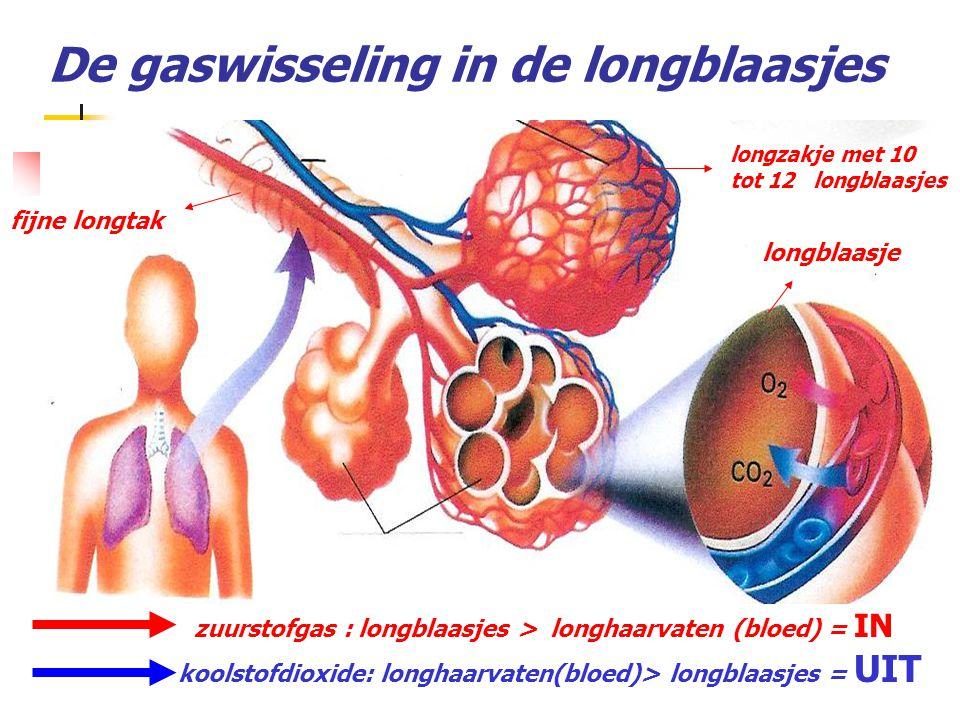 De gaswisseling in de longblaasjes zuurstofgas : longblaasjes > longhaarvaten (bloed) = IN koolstofdioxide: longhaarvaten(bloed)> longblaasjes = UIT f