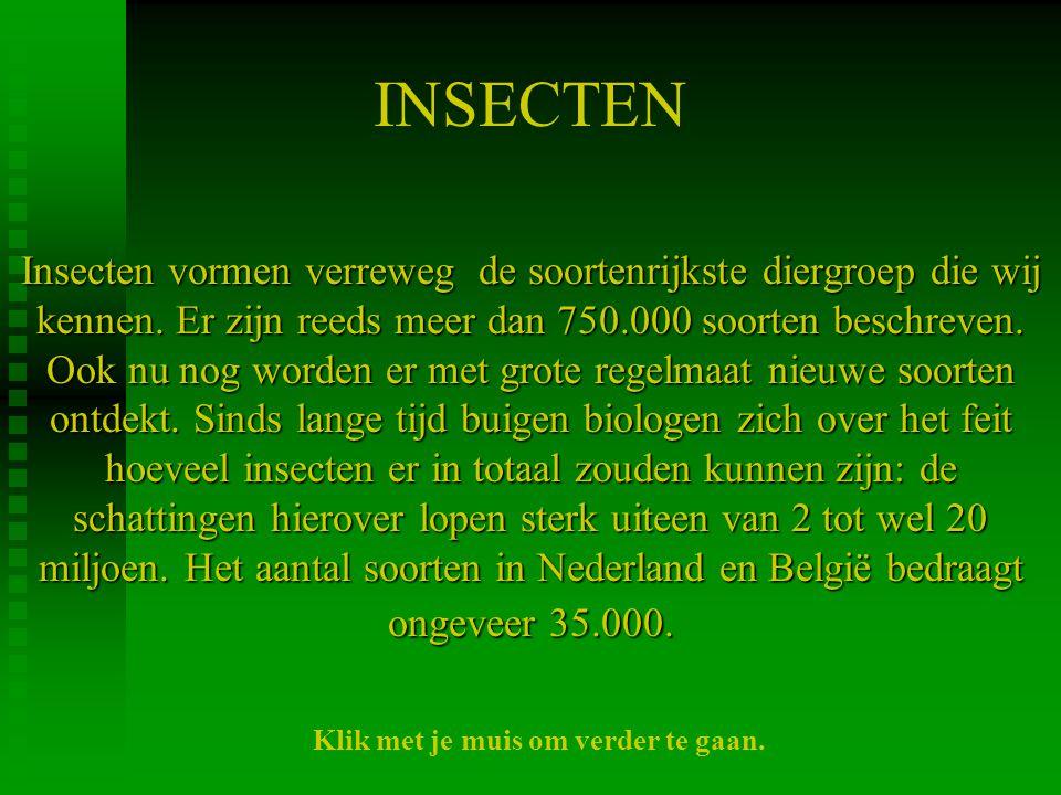 INSECTEN Insecten vormen verreweg de soortenrijkste diergroep die wij kennen. Er zijn reeds meer dan 750.000 soorten beschreven. Ook nu nog worden er