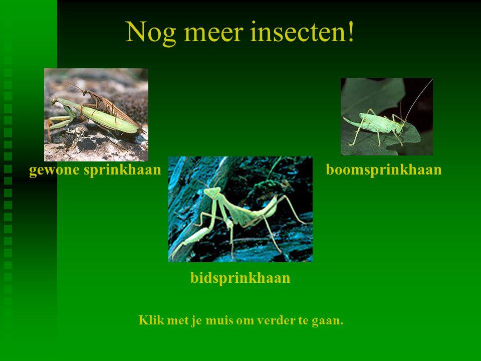 Nog meer insecten! gewone sprinkhaanboomsprinkhaan bidsprinkhaan Klik met je muis om verder te gaan.