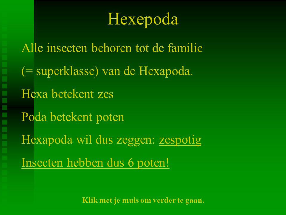 Hexepoda Alle insecten behoren tot de familie (= superklasse) van de Hexapoda. Hexa betekent zes Poda betekent poten Hexapoda wil dus zeggen: zespotig