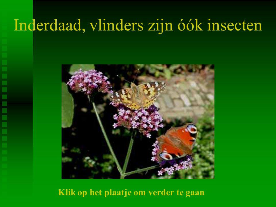 Inderdaad, vlinders zijn óók insecten Klik op het plaatje om verder te gaan