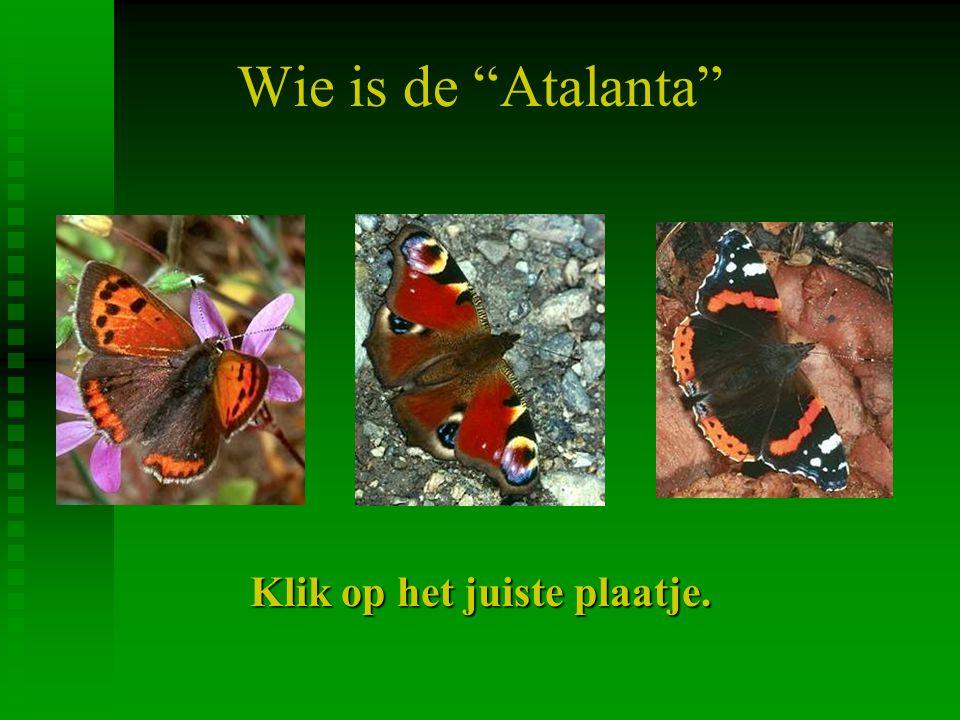 Vlinders zijn óók insecten klik op het plaatje om verder te gaan