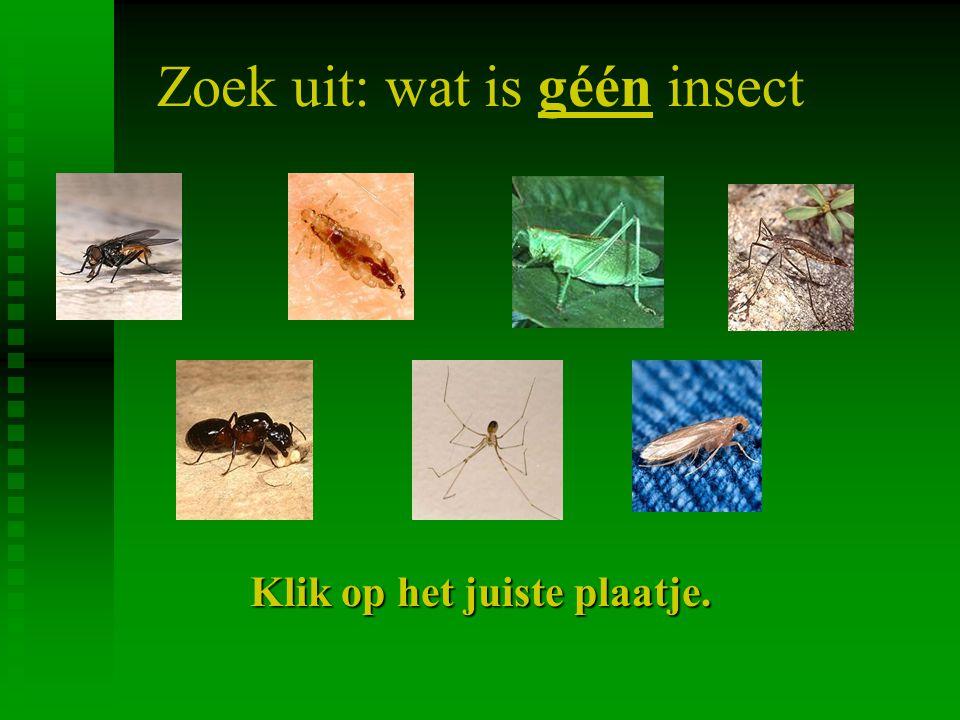 Zoek uit: wat is géén insect Klik op het juiste plaatje.
