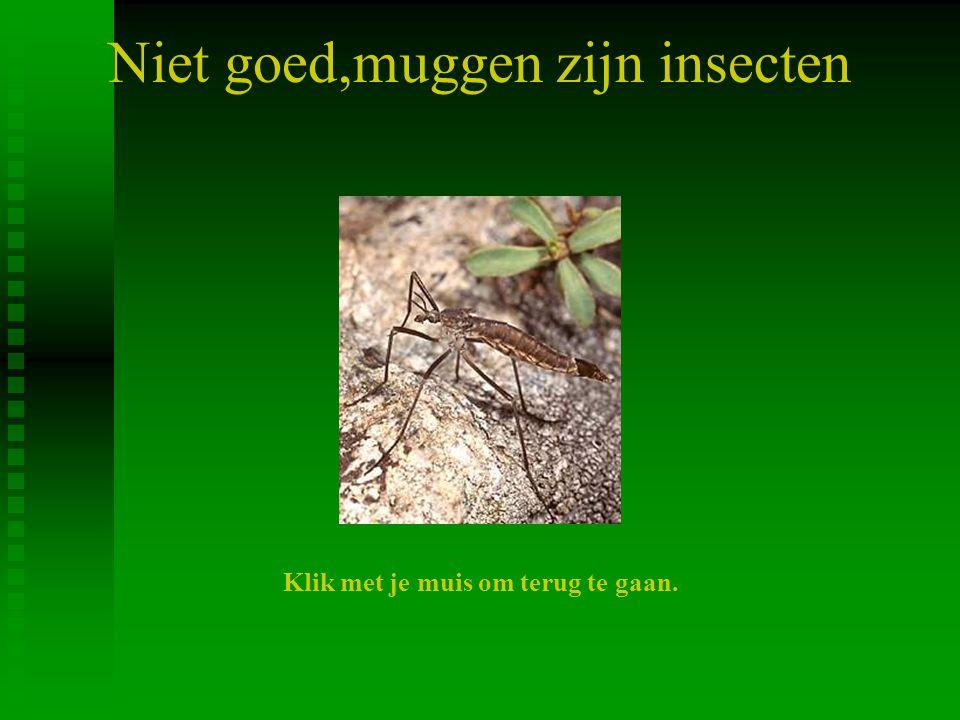 Niet goed,muggen zijn insecten Klik met je muis om terug te gaan.