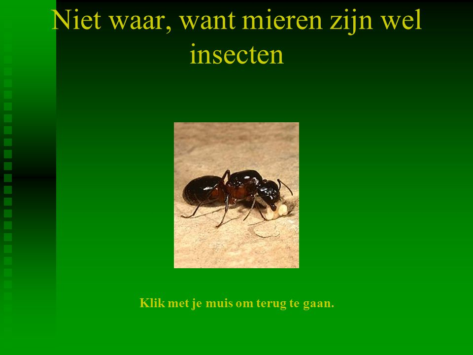 Niet waar, want mieren zijn wel insecten Klik met je muis om terug te gaan.