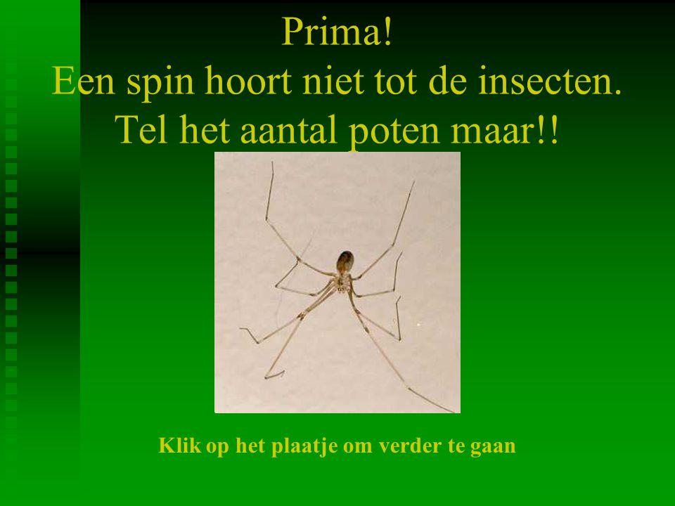 Prima! Een spin hoort niet tot de insecten. Tel het aantal poten maar!! Klik op het plaatje om verder te gaan