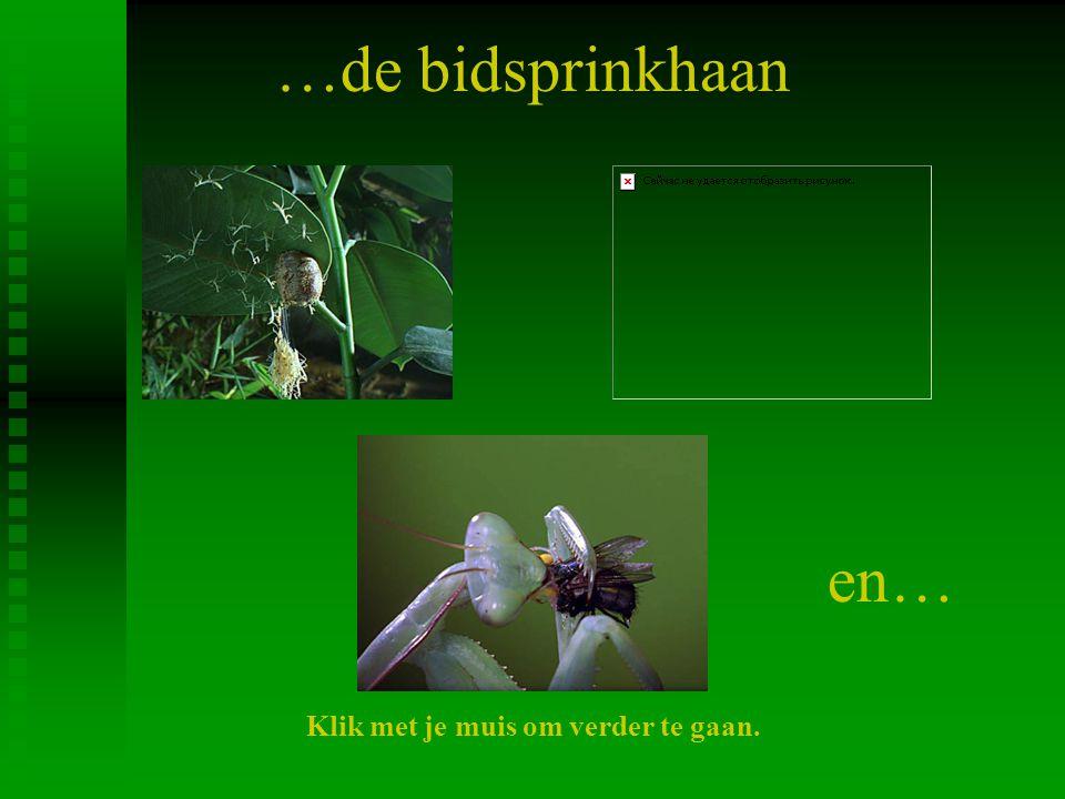de Papilio: van eitje tot vlinder. Klik met je muis om verder te gaan.