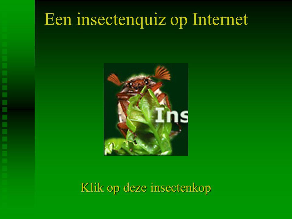 Een insectenquiz op Internet Klik op deze insectenkop