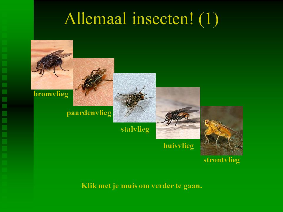 Allemaal insecten! (1) bromvlieg paardenvlieg stalvlieg huisvlieg strontvlieg Klik met je muis om verder te gaan.
