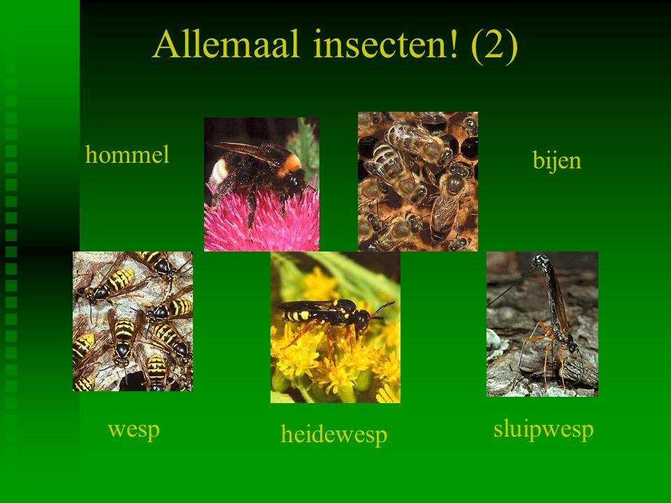 Allemaal insecten.
