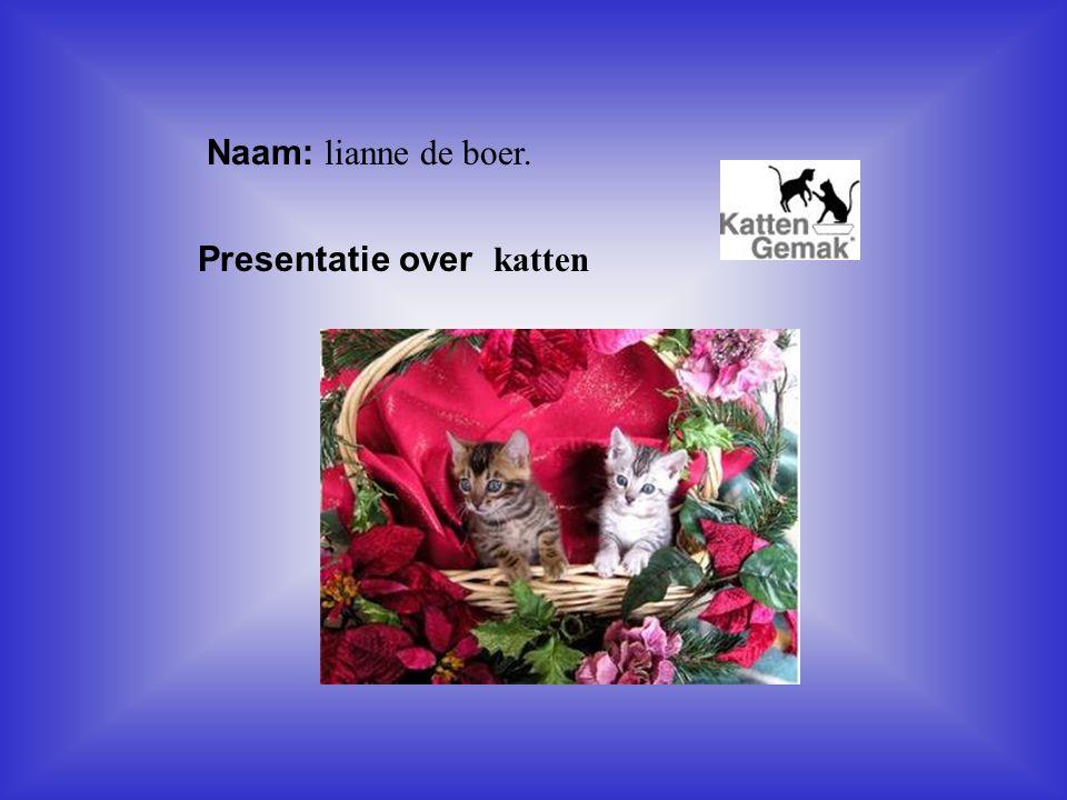 """Naam: lianne de boer. Presentatie over katten Klik op """"Naam"""". Vul je naam in. Doe hetzelfde met """"hobby"""" Hier kun je een foto / tekening Invoegen"""