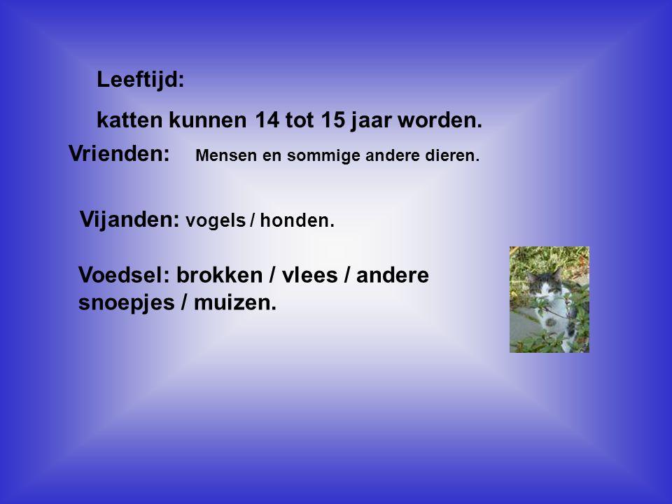 naamadres De huiskatjeshttp://groups.msn.com/DeHuiskatjes/welkom.msnw Clun van lieve en inteliegente katten.