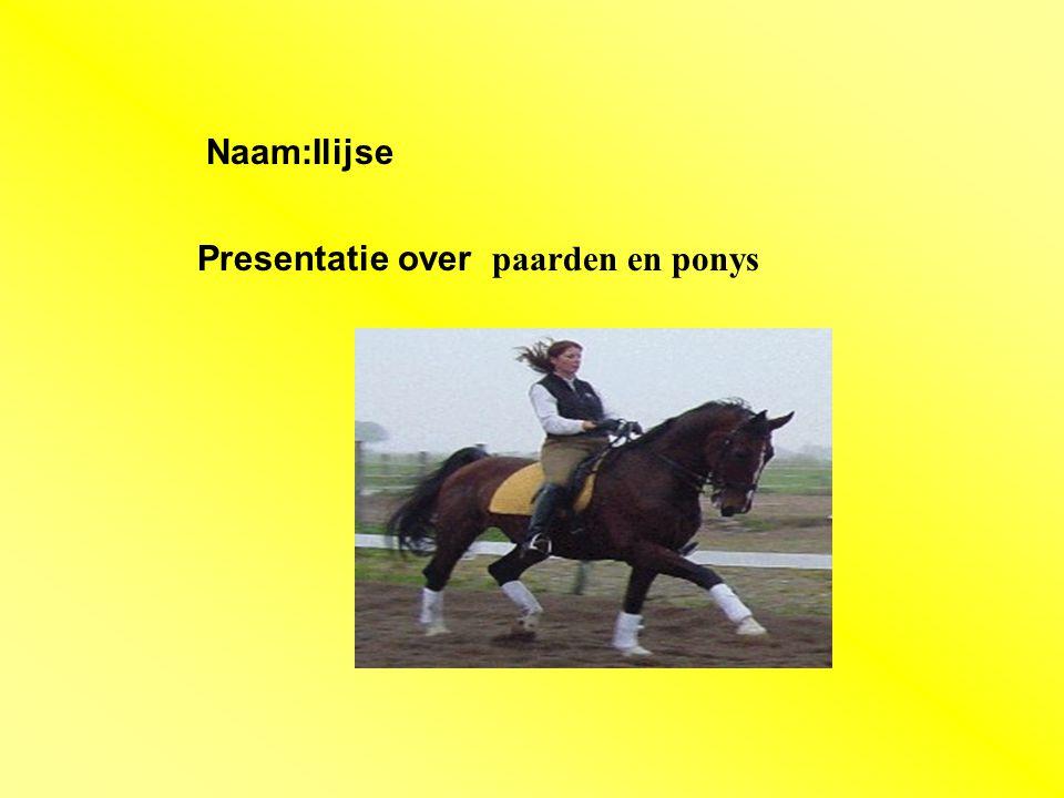 """Naam:Ilijse Presentatie over paarden en ponys Klik op """"Naam"""". Vul je naam in. Doe hetzelfde met """"hobby"""" Hier kun je een foto / tekening Invoegen"""