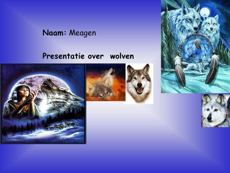 """Naam: Meagen Presentatie over wolven Klik op """"Naam"""". Vul je naam in. Doe hetzelfde met """"hobby"""" Hier kun je een foto / tekening Invoegen"""