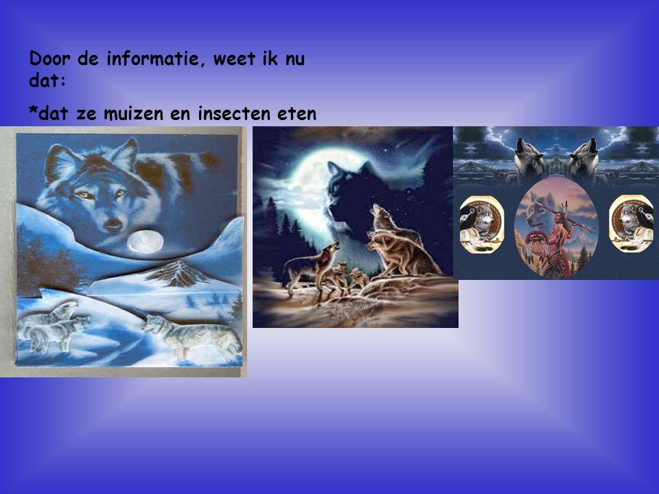 Door de informatie, weet ik nu dat: *dat ze muizen en insecten eten Kijk naar de antwoorden van vraag 13 Voeg hier foto's of plaatjes in