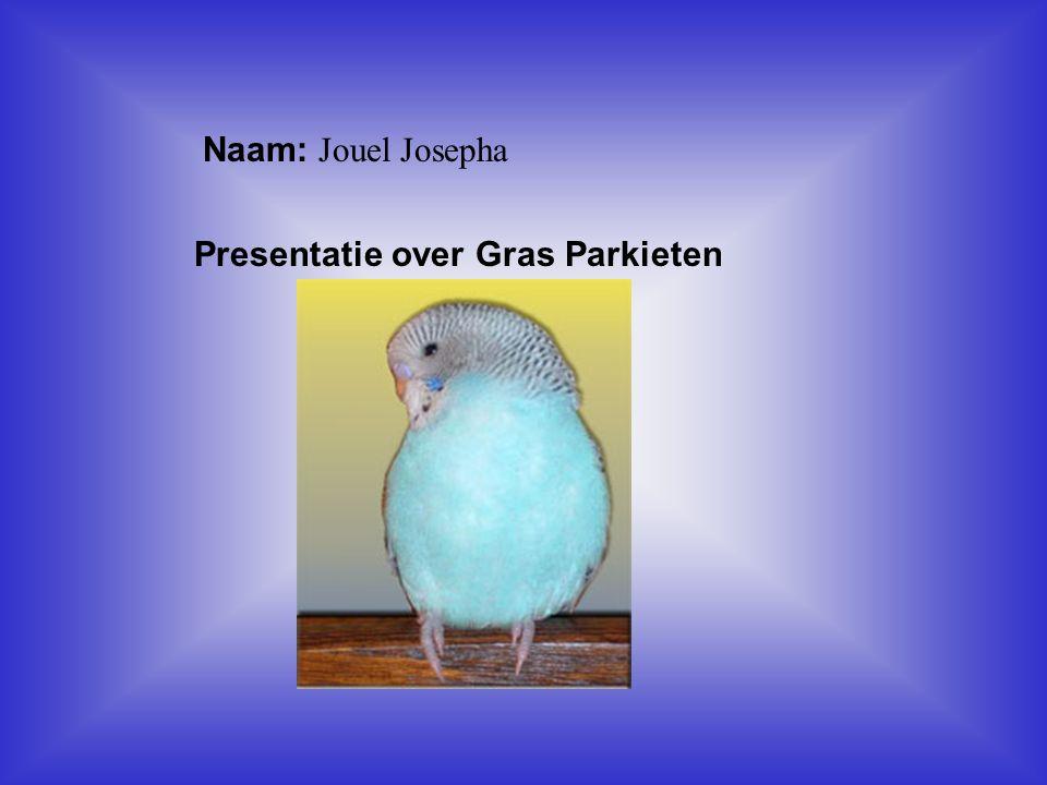 """Naam: Jouel Josepha Presentatie over Gras Parkieten Klik op """"Naam"""". Vul je naam in. Doe hetzelfde met """"hobby"""" Hier kun je een foto / tekening Invoegen"""