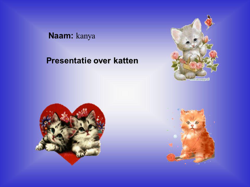 """Naam: kanya over katten Presentatie over katten Klik op """"Naam"""". Vul je naam in. Doe hetzelfde met """"hobby"""" Hier kun je een foto / tekening Invoegen"""