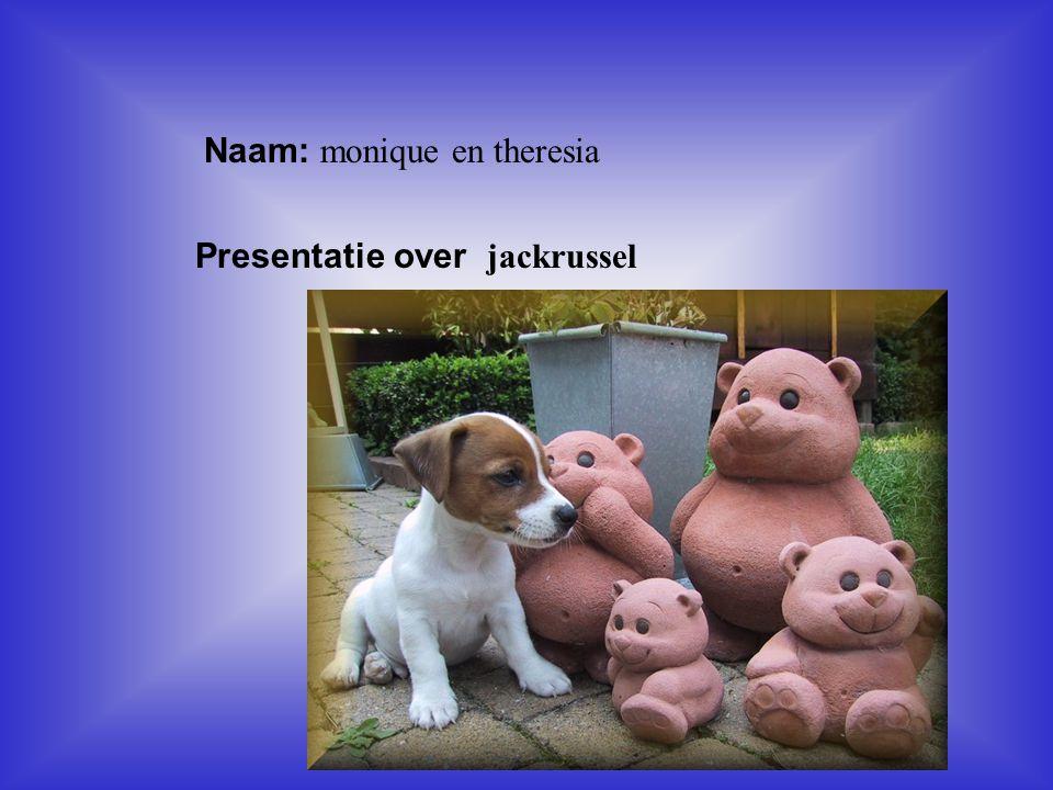 """Naam: monique en theresia Presentatie over jackrussel Klik op """"Naam"""". Vul je naam in. Doe hetzelfde met """"hobby"""" Hier kun je een foto / tekening Invoeg"""