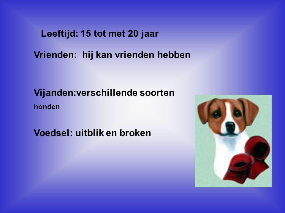 Leeftijd: 15 tot met 20 jaar Vul hier de antwoorden van vraag 6,7,8,9 in Vrienden: hij kan vrienden hebben Vijanden:verschillende soorten honden Voeds