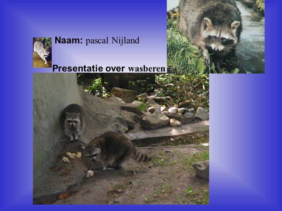 Naam: pascal Nijland Presentatie over wasberen Klik op Naam .