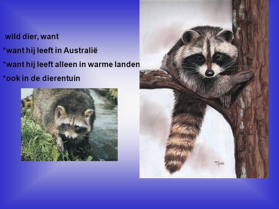 wild dier, want *want hij leeft in Australië *want hij leeft alleen in warme landen *ook in de dierentuin Vul hier in, waarom dit dier een huisdier is, of een wild dier