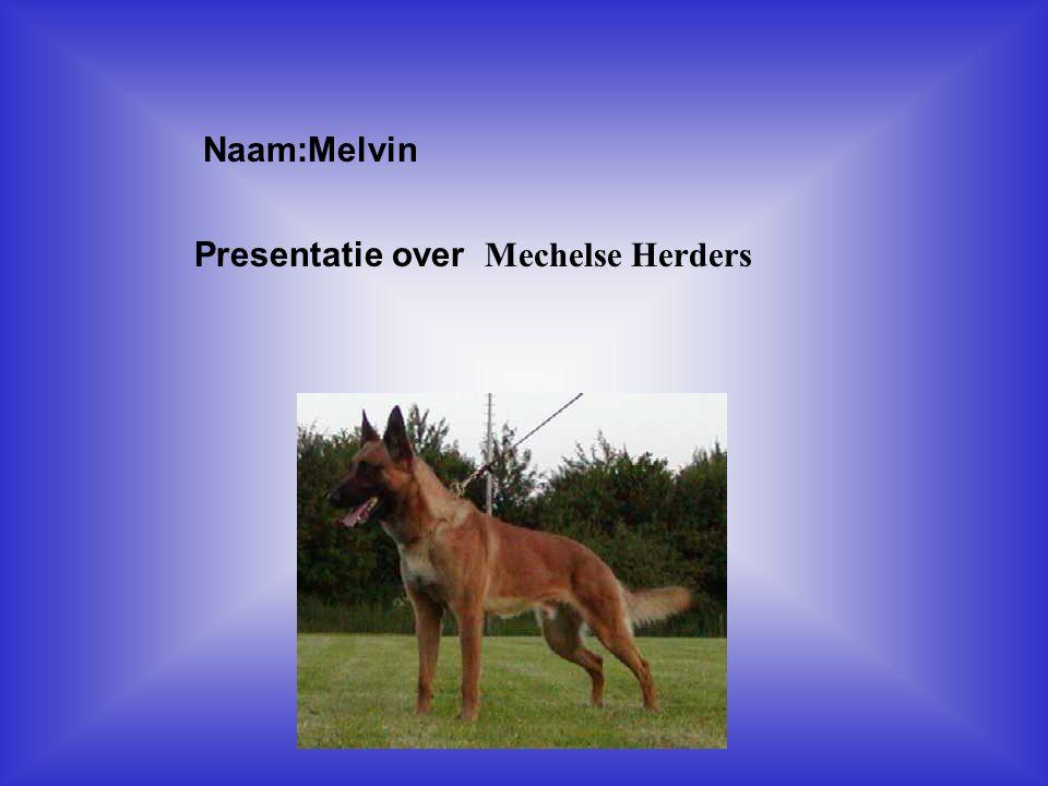 Naam:Melvin Presentatie over Mechelse Herders Klik op Naam .