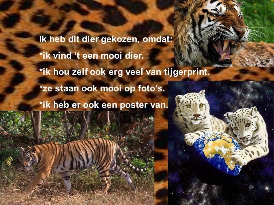 Ik heb dit dier gekozen, omdat: *ik vind 't een mooi dier. *ik hou zelf ook erg veel van tijgerprint. *ze staan ook mooi op foto's. *ik heb er ook een
