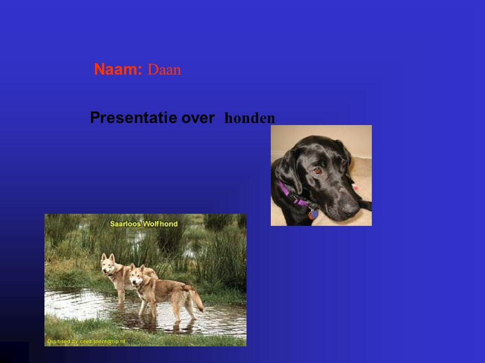 """Naam: Daan Presentatie over honden Klik op """"Naam"""". Vul je naam in. Doe hetzelfde met """"hobby"""" Hier kun je een foto / tekening Invoegen"""