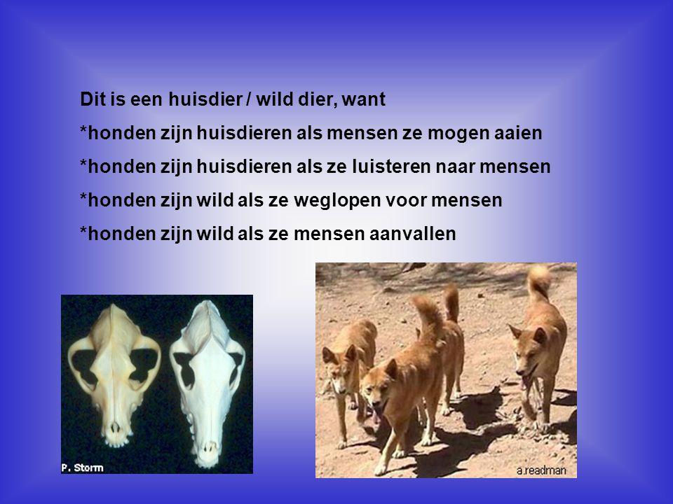 Dit is een huisdier / wild dier, want *honden zijn huisdieren als mensen ze mogen aaien *honden zijn huisdieren als ze luisteren naar mensen *honden z