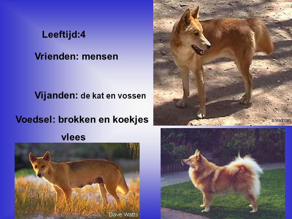 Door de informatie, weet ik nu dat: *dat honden vrienden zijn *lief zijn ( de huisdieren) *als ze wild zijn, zijn ze vals * Kijk naar de antwoorden van vraag 13 Voeg hier foto's of plaatjes in