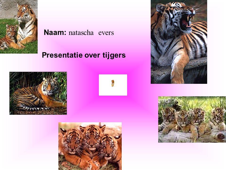 """Naam: natascha evers Presentatie over tijgers Klik op """"Naam"""". Vul je naam in. Doe hetzelfde met """"hobby"""" Hier kun je een foto / tekening Invoegen"""