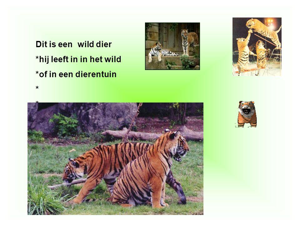 Dit is een wild dier *hij leeft in in het wild *of in een dierentuin * Vul hier in, waarom dit dier een huisdier is, of een wild dier