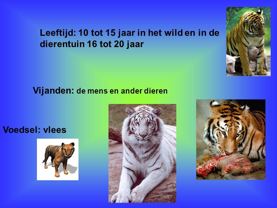 Ik weet over dit dier Dat ze twee kleuren hebben bruin met zwart en wit met zwart En dat de ze 3 tot 4 jongen krijgen En dat ze wel 180 kilo wegen En volwassen tijgers hebben zo 30 grote tanden De hoektanden kunnen 7,15 cm lang zijn