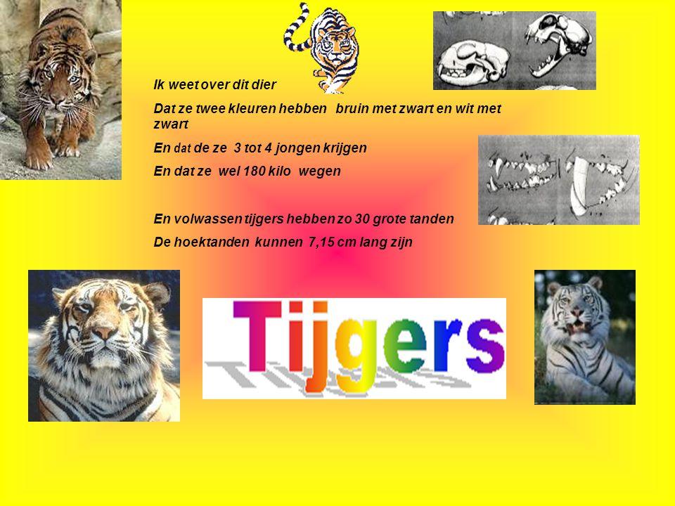 Gebruikte informatie: www, Google.nl www.De witte tijger.nl *www.tijgersite.nl * Datum: 06-06-2005 Welke informatie heb je gebruikt : -Boeken -Internetsites -Clubblaadje -Eigen ervaring -Informatie van clubleden -Kijk naar de antwoorden van vraag 14,15 Typ hier de datum, waarin je deze presentatie hebt gemaakt.