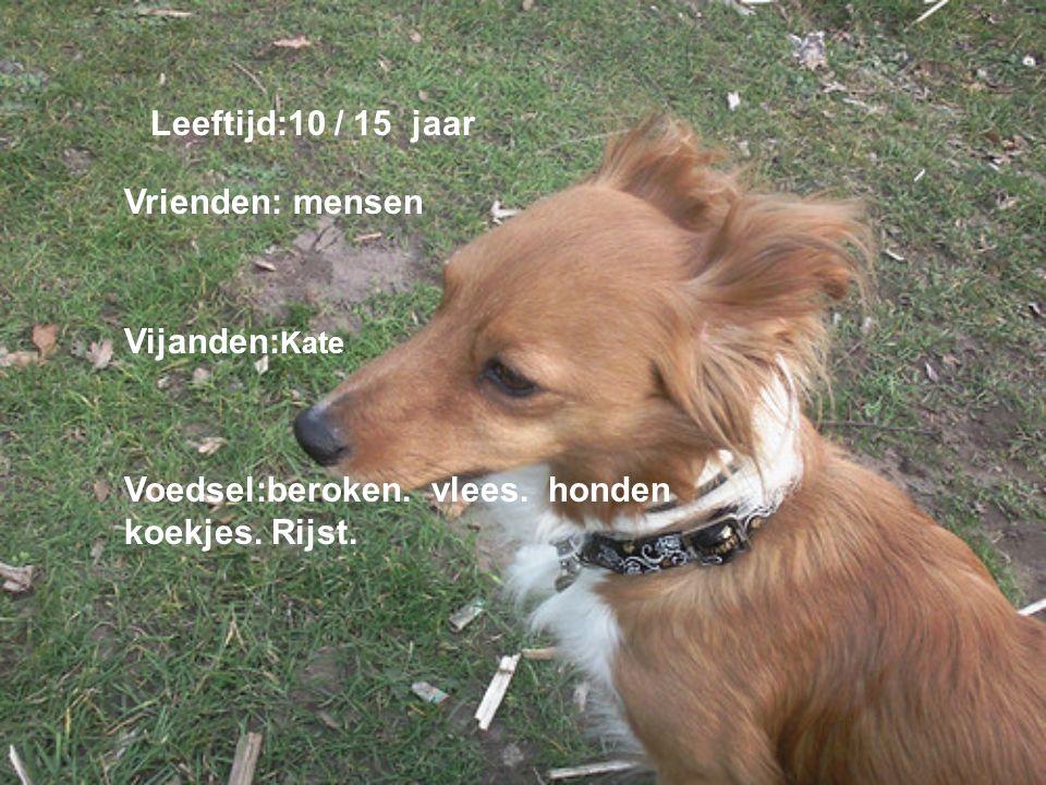 naamadres Hondensportvereni ging Club gebouw kc Arnhem Dit zijn een paar verenigingen / clubs Van deze vereniging / club ben ik lid: 1 van mijn hond kan niet met andere honden op schieten.