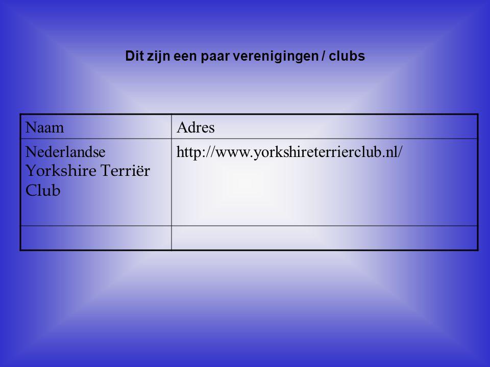 NaamAdres Nederlandse Yorkshire Terriër Club http://www.yorkshireterrierclub.nl/ Dit zijn een paar verenigingen / clubs Als er geen verenigingen zijn,