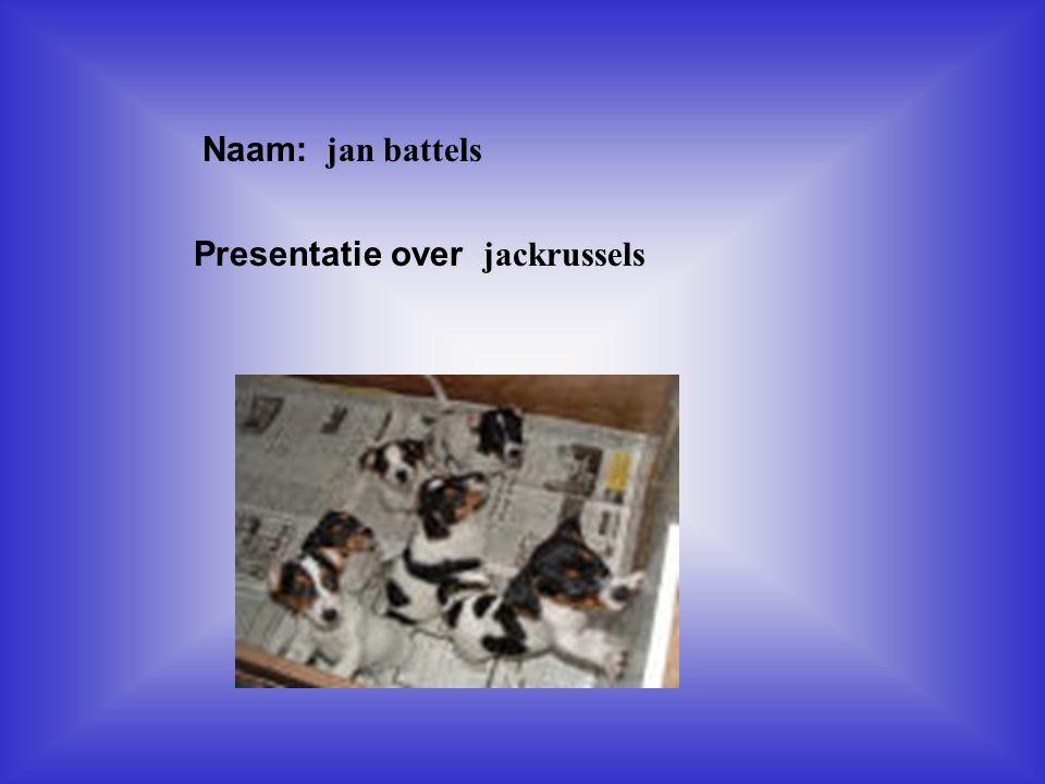 """Naam: jan battels Presentatie over jackrussels Klik op """"Naam"""". Vul je naam in. Doe hetzelfde met """"hobby"""" Hier kun je een foto / tekening Invoegen"""