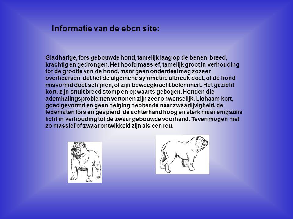 Informatie van de ebcn site: Kijk naar de antwoorden van vraag 13 Voeg hier foto's of plaatjes in Gladharige, fors gebouwde hond, tamelijk laag op de benen, breed, krachtig en gedrongen.