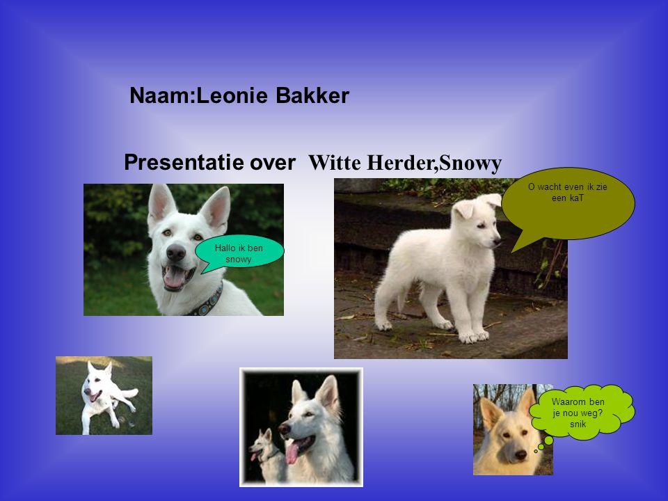 """Naam:Leonie Bakker Presentatie over Witte Herder,Snowy Klik op """"Naam"""". Vul je naam in. Doe hetzelfde met """"hobby"""" Hier kun je een foto / tekening Invoe"""