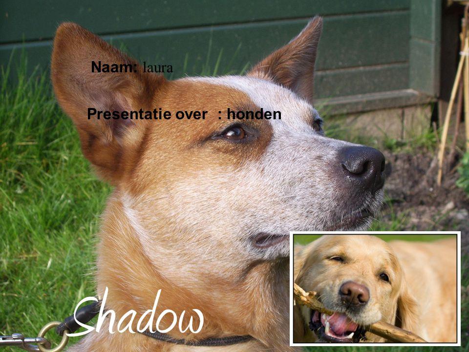 Naam: laura Presentatie over : honden Klik op Naam .