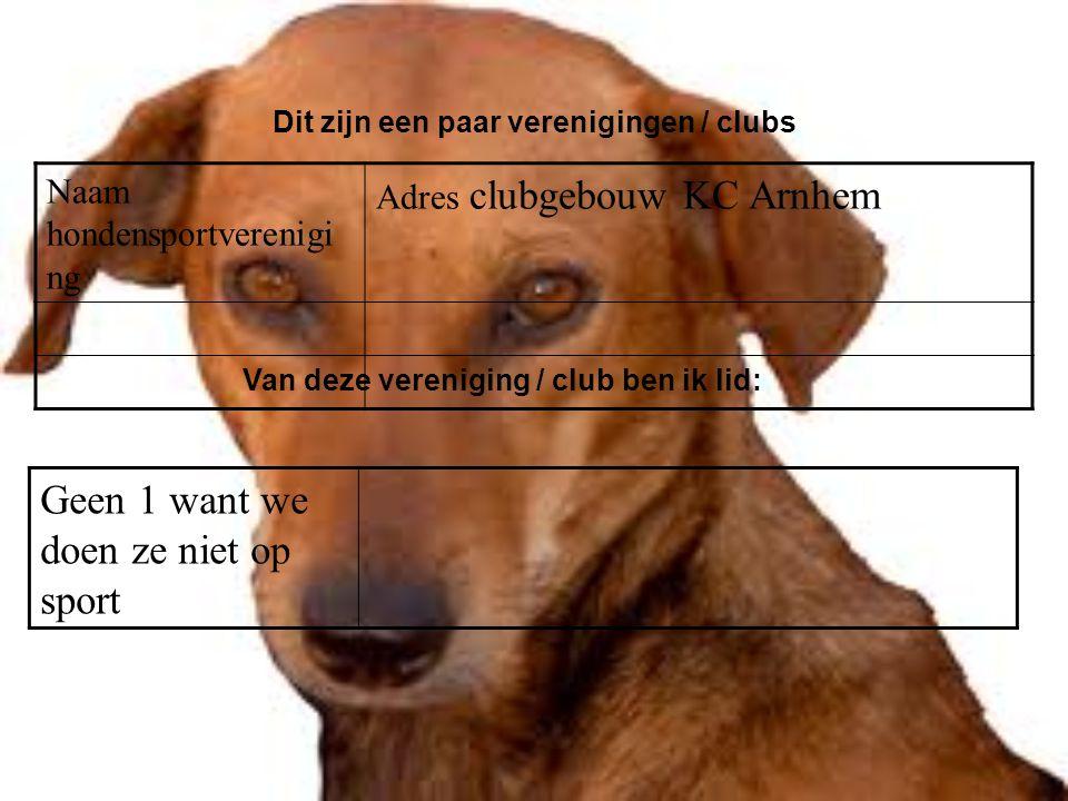 Naam hondensportverenigi ng Adres clubgebouw KC Arnhem Dit zijn een paar verenigingen / clubs Van deze vereniging / club ben ik lid: Geen 1 want we doen ze niet op sport Als er geen verenigingen zijn, klik dan met de rechter muisknop op de 5e dia; klik op knippen