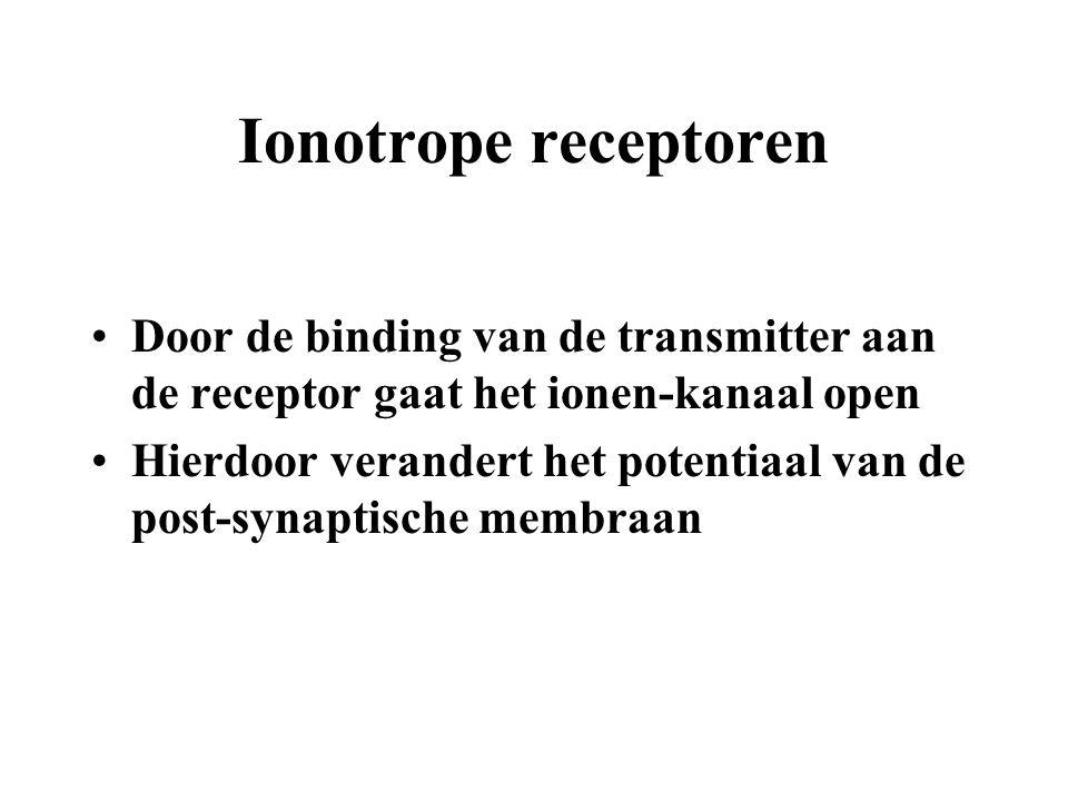 Ionotrope receptoren Door de binding van de transmitter aan de receptor gaat het ionen-kanaal open Hierdoor verandert het potentiaal van de post-synap