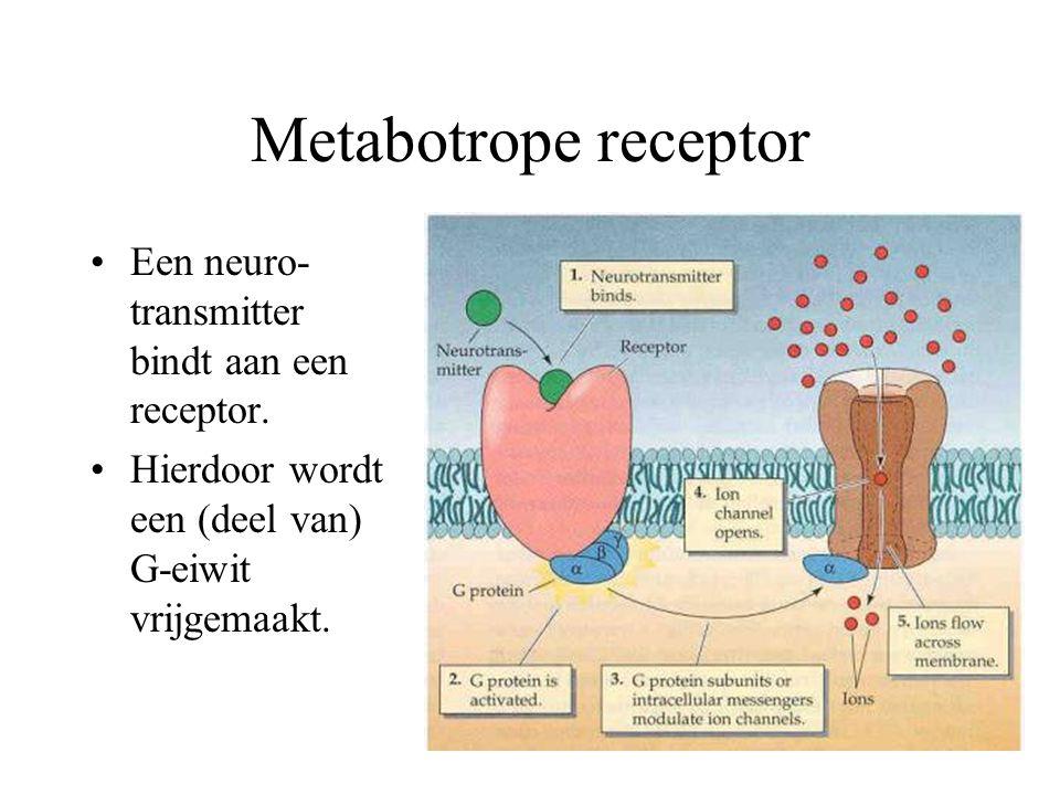 Metabotrope receptor Een neuro- transmitter bindt aan een receptor. Hierdoor wordt een (deel van) G-eiwit vrijgemaakt.