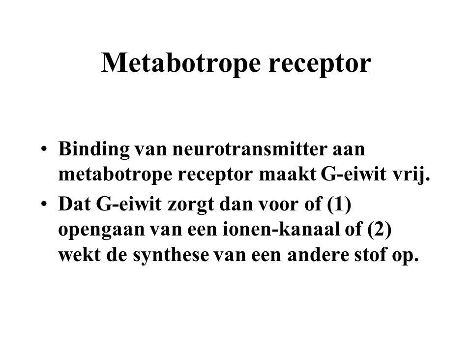 Metabotrope receptor Binding van neurotransmitter aan metabotrope receptor maakt G-eiwit vrij. Dat G-eiwit zorgt dan voor of (1) opengaan van een ione